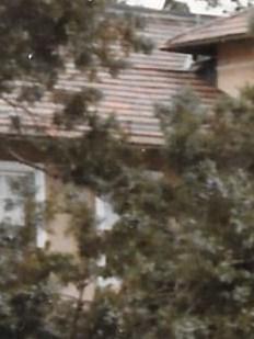 Charlene Elizabeth  Taylor